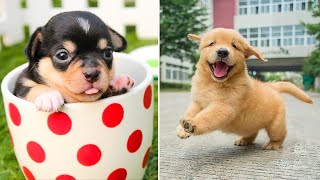 Baby Dogs 🔴 Cute and Funny Dog Videos Compilation #10 | Funny Puppy Videos 2021