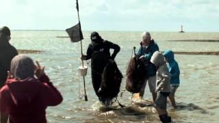 Esbjerg Wadden Sea Tours