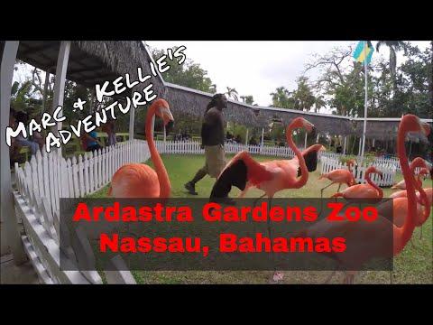 Ardastra Gardens Zoo Conservation Center Nassau Bahamas