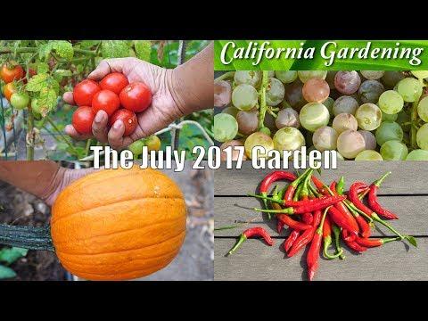 Monthly Garden Series - July 2017 - Summer Harvest Month