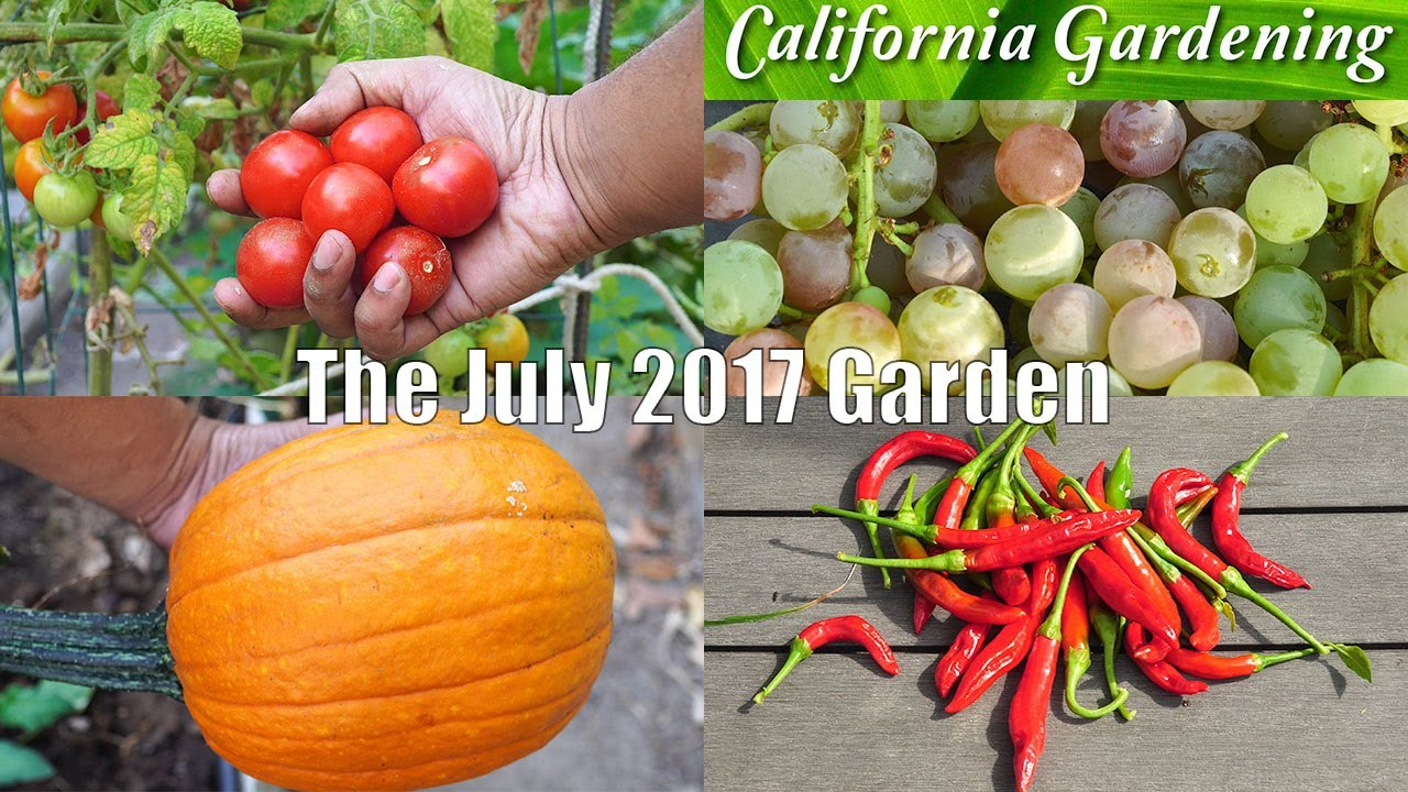 monthly garden series july 2017 summer harvest month youtube