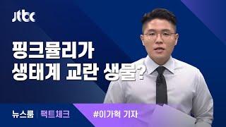 [팩트체크] 핑크뮬리가 '생태계 교란 생물'이라고? / JTBC 뉴스룸