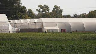 Farming in Poly House | पोलीहाउस में खेती  | Shashwat yogic Kheti
