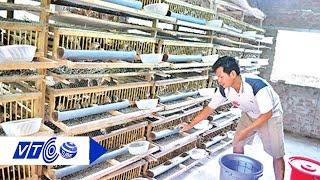 Thăm trang trại chim cút có 1-0-2 ở Việt Nam | VTC