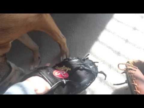 Rawlings vs wilson catchers mitts