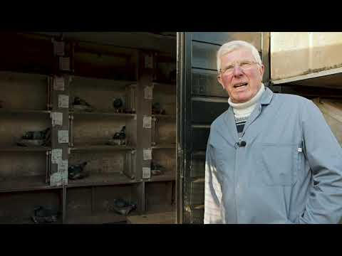 Quick Tips 9: Moving Eggs To Foster Pigeons With Willem De Bruijn (English Subtitles).