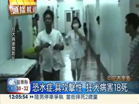 4年前爆狂犬病 峇里島18人送命