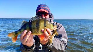 ЩУКИ и ОКУНИ КАБАНЫ КЛЮЮТ на КАЖДОМ ЗАБРОСЕ Рыбалка на спиннинг в Астрахани