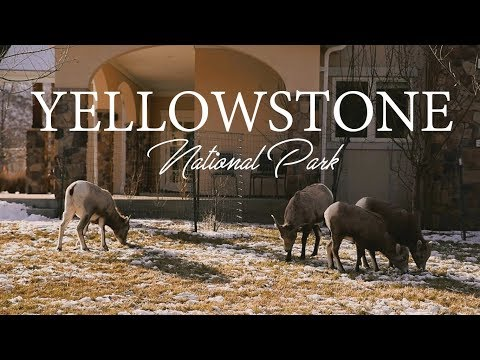 BABES AT YELLOWSTONE PARK | Landscapes and Wildlife