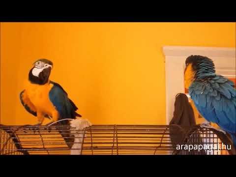 TollasTV - 3.rész Papagájok egymás közt