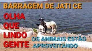 #Barragem de Jati CE Os Animais Estão Aproveitando Que Lindo Gente