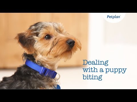 how-to-stop-puppy-biting-|-puppy-&-kitten-training-tips-|-petplan