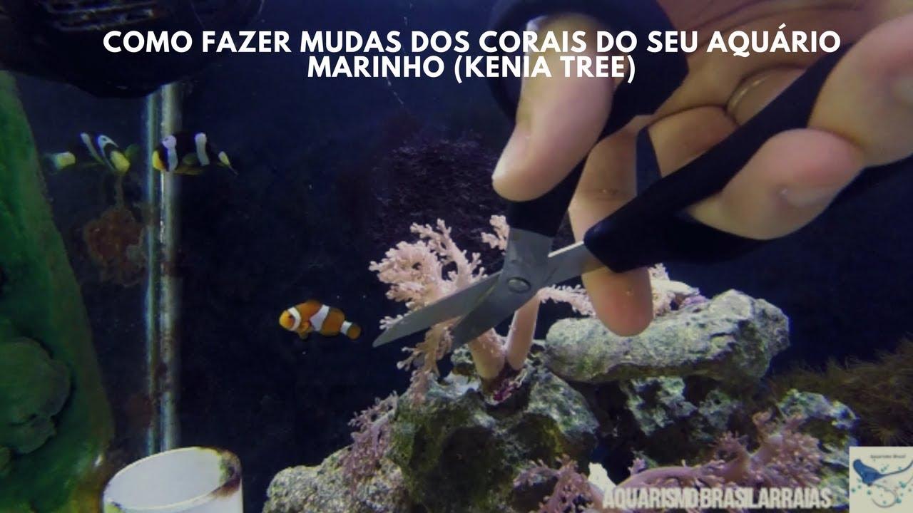 Como fazer mudas dos corais do seu aquário marinho (kenia tree) - Aquarismo Brasil Arraias