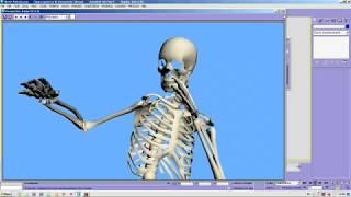 Skelet 3D Model Animatsia