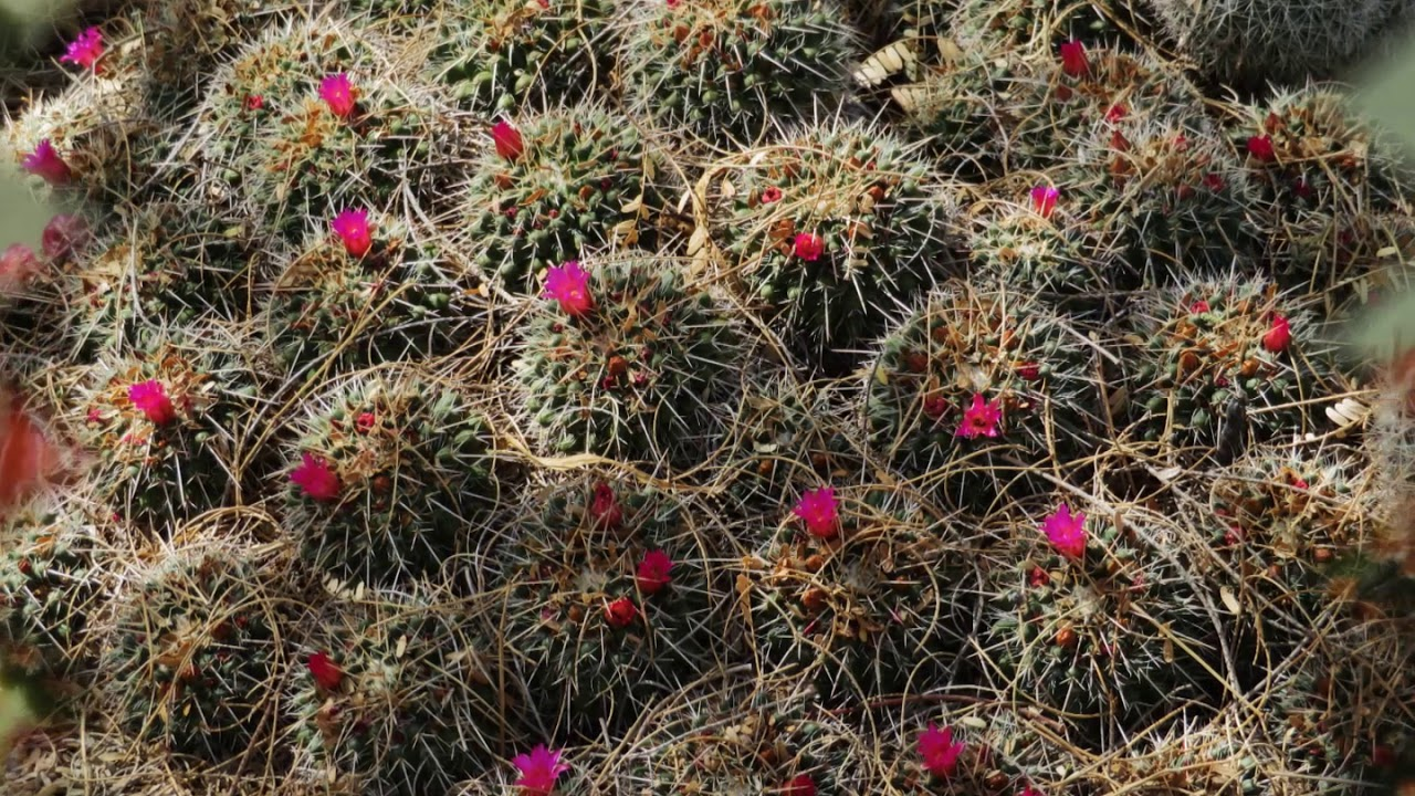 Phoenix AZ Desert Botanical Garden - March 2018 - YouTube