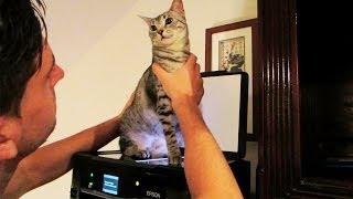 CAT SCAN!!