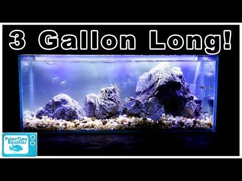 3 Gallon Long Aquarium Simple Desktop Setup - Easy To Maintain!