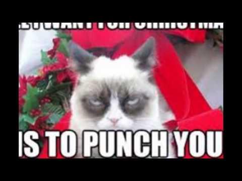 Funny Grumpy Cat Christmas Memes.Grumpy Cat Christmas Youtube