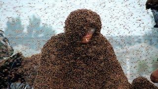 109 кг пчел на человеке и другие самые безумные рекорды Гиннесса!
