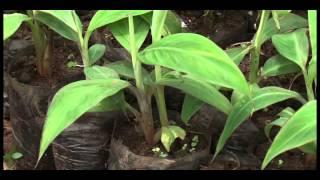 TECHNIQUE DU PIF (PLANTS ISSUS DE FRAGMENTS DE TIGE)