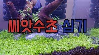씨앗수초로 미니 베타 수조 만들기 ♥  미니베타수조 ,…