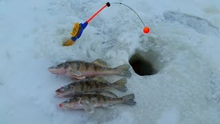 Зимняя рыбалка берша,судака на тюльку на Волге.