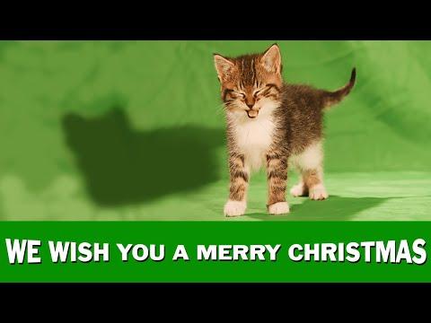 "Jingle Cats ""We Wish You A Merry Christmas"""