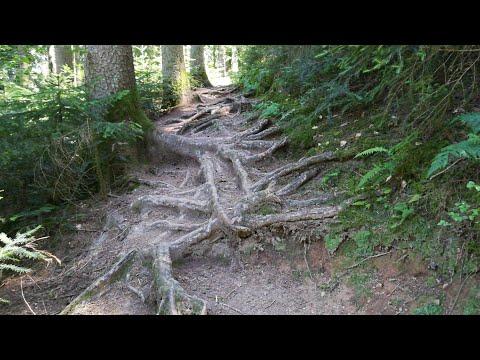 Schwarzwald Bike Crossing