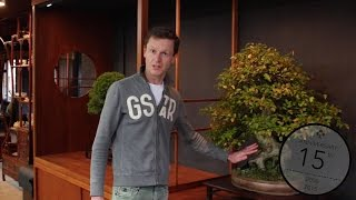The trunk of a Bonsai deserves specific attention, as it is one of ...