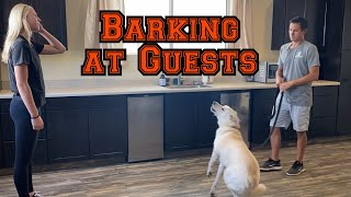 Does your dog bark at people coming to the house?