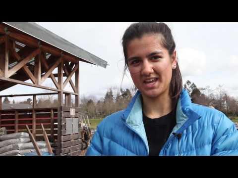 Seattle Green Grub-UW Farm Volunteer Day