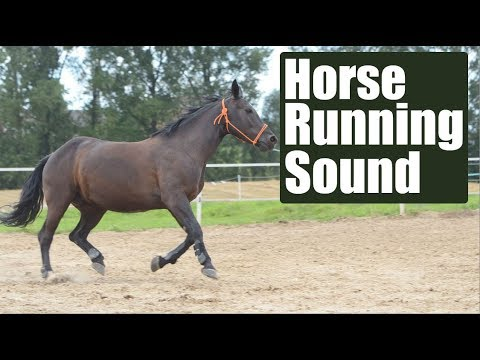 Horse Running Sound Effect - YouTube - photo#3