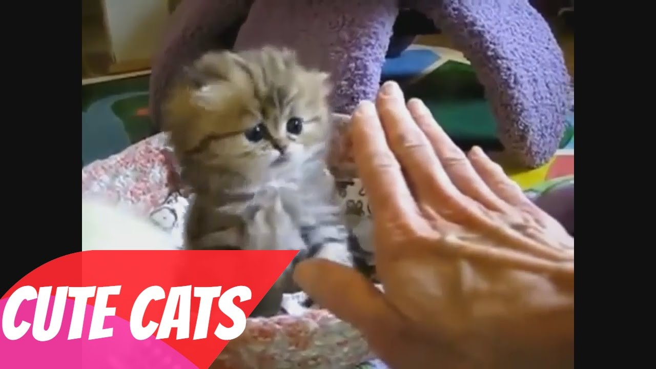 Cute Cats Cute Cat Videos Cute Cats Videos pilation 2016