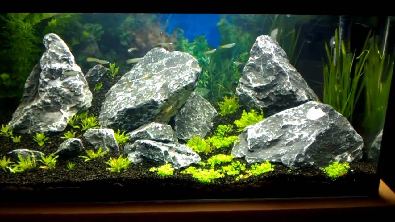 54L Iwagumi Aquascape