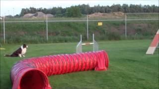 Manny agility training May 2014 Thumbnail