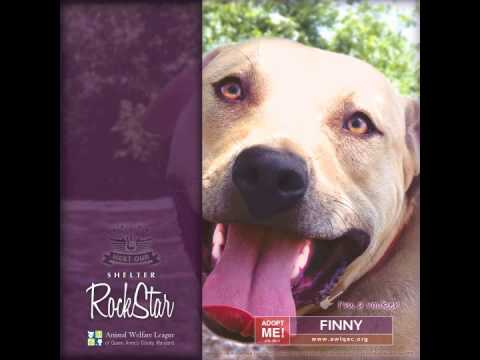 Finny - Shelter RockStar - Animal Welfare League of Queen Anne's County, MD