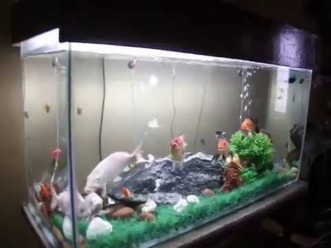 Update new aquascape my fish tank koi grown upto 7inch for Coy fish tank