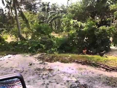 Bga Bante, Zarraga Iloilo - Typhoon Yolanda