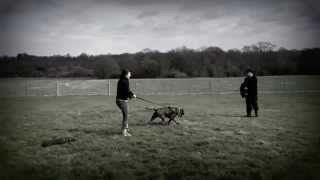 Swatt Dogs K9 Sports And Training  Day 2012