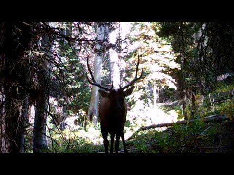 ELK HUNTING CRISIS   Solo Archery Elk Hunting