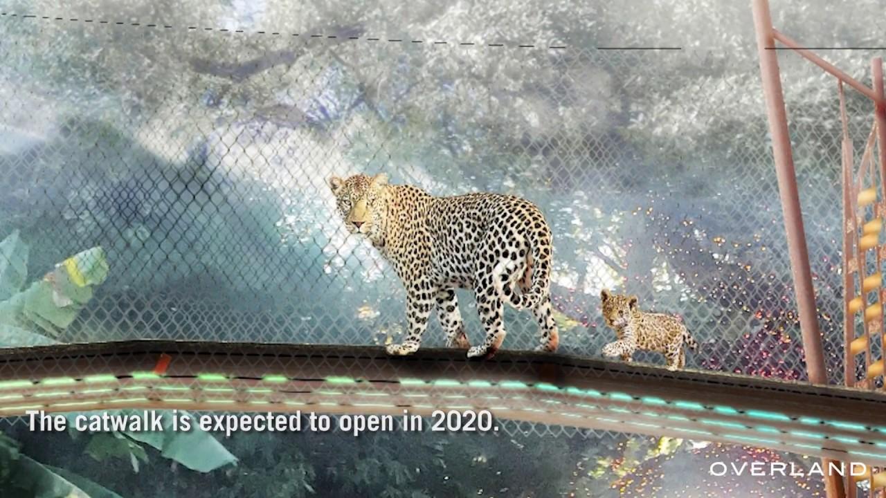 Jaguar San Antonio >> San Antonio Zoo Jaguar Catwalk