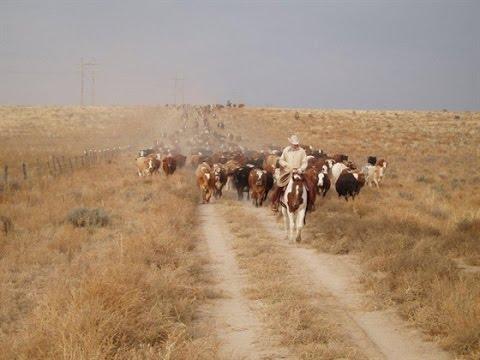 Chico Basin Ranch: A Unique Brand