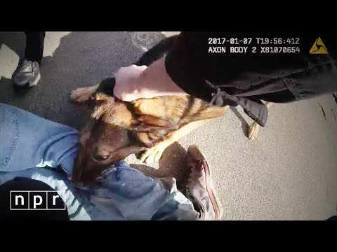 Can Gory Police Dog Arrests Survive The Age Of Video? | NPR