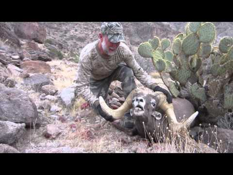 Arizona Desert Bighorn Sheep Hunt Video-Bob O'Connor Ram with Colburn and Scott Outfitters
