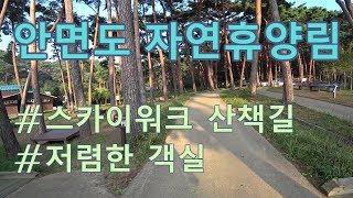 [휴양림 리뷰] 안면도자연휴양림 | 스카이워크 | 객실…