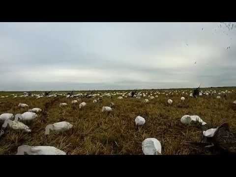 Garwood Texas Goose Hunt 11-13-2014