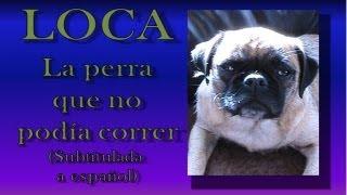 Loca, La Perra Que No Podía Correr Subtitulada