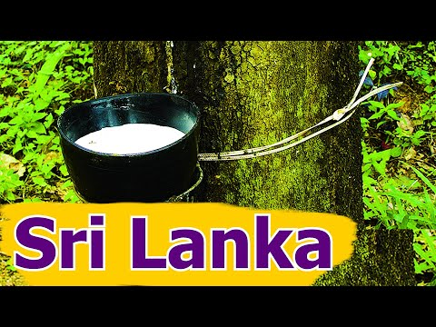The natural rubber industry in Sri Lanka