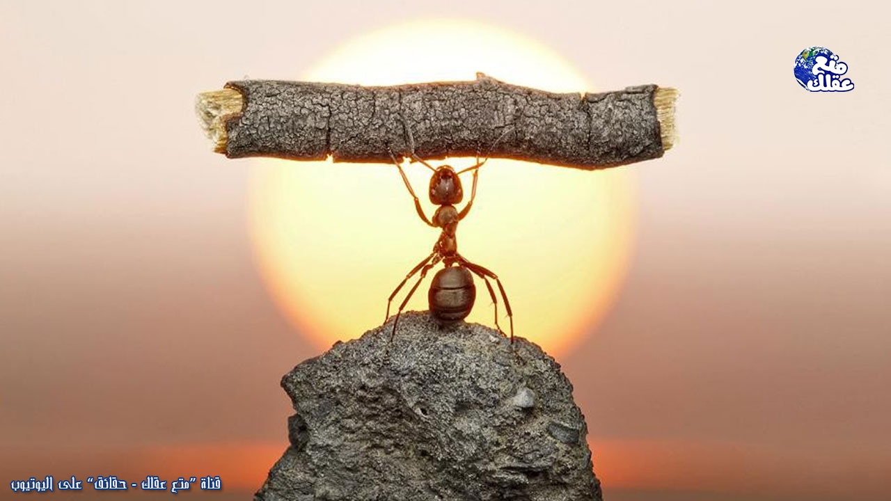 حقائق خارقة عن النمل | منافس الإنسان على حكم الأرض !