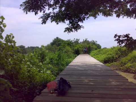Image Result For Wisata Surabaya Hutan Mangrove